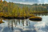 Floating bog