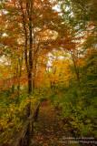 Boardwalk in autumn forest