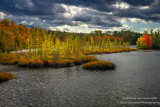 A windy and gorgeous autumn day, bog