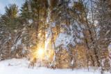 Setting winter sun