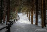 Snow shoe path