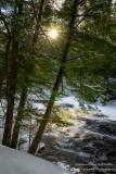 Sun peeking through, along the Tyler Fork river