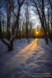 Sunlit snowy path