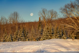 Setting full moon with deer tracks in the snow