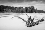 Spring scenery with driftwood, in black & white