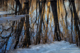 Transition - ice, water, reflections 2