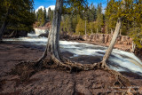 Cedar Trees on bare rocks, Gooseberry Falls