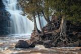 Cedar trees at Lower Falls, Gooseberry Falls State Park