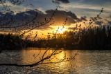 Budding Maple tree at sunset