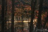 A little foot bridge amongst blooming Maple trees