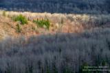 View from Juniper Rock overlook 4