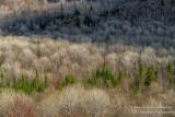 View from Juniper Rock overlook 5
