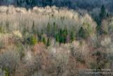 View from Juniper Rock overlook 6