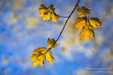 Baby spring leaves