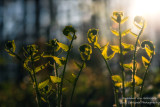 Ferns in evening light