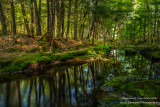 Creek with reflections, Blue Hills, Wisconsin 2