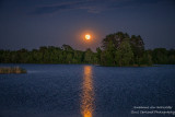 Strawberry Full Moon 2