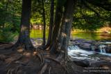 Cedar trees at Upper Gooseberry Falls