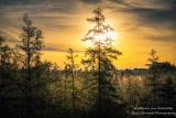 Foggy Sunrise at a bog