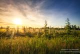 Foggy Sunrise at a bog, northern Wisconsin