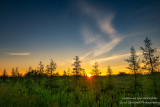 Sunrise at a bog, northern Wisconsin
