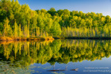 Summer reflections, Audie Lake 1