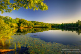 Summer reflections, Audie Lake 2