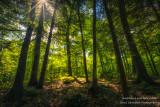 Magical forest light