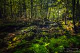 Magical forest light and creek