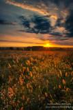 Late August sunrise in a field