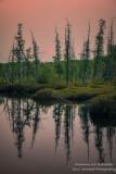 Pink sunset at a bog in the Blue Hills 1