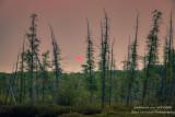 Pink sunset at a bog in the Blue Hills 2