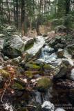 Magical woodland scene