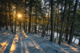 Sunburst in forest along the Flambeau river