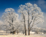 Trees with rime frost 1