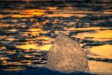 Ice shard in evening light