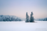 Rime Frost at Audie Lake 4