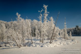 Rime frost on a sunny day in the Blue Hills 5