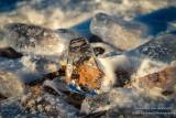 Lake Superior Ice Agates 1
