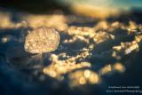Lake Superior Ice Agates 4