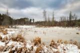 Frozen beaver pond 1