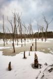 Frozen beaver pond 2