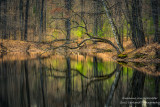 Perfect reflections, bent tree