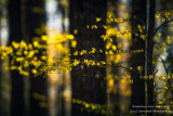 Sunlit spring foliage