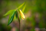 Dreamy little woodland flower