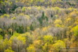 Spring forest - view from Juniper Rock 3