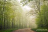 Foggy morning drive through the Blue Hills