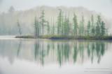 Foggy morning scene, bog at Audie Lake