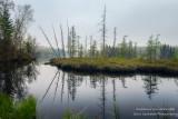 Foggy morning scene, bog at Audie Lake 2