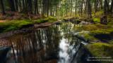 Reflections at a creek 1
